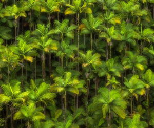 forest, landscape, and hawaii image