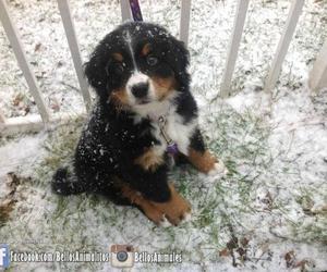 adorable, beautiful, and dog image