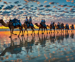 camel, sunset, and sky image