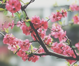 branch, pink, and flowers image