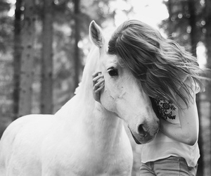 horse, black and white, and white image