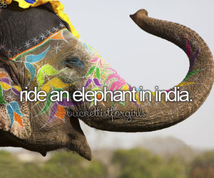 elephant, india, and animal image