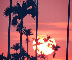 colorful, Dream, and palm trees image