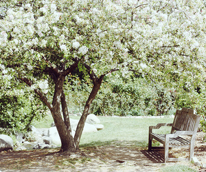 flowers, bench, and garden image