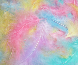 feather, colorful, and pastel image