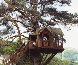 tree, house, and Dream image