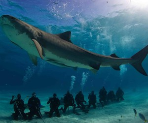 shark, ocean, and amazing image