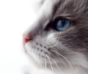 cat, cute, and beautiful image