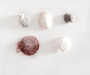 minimal, white, and lovely image