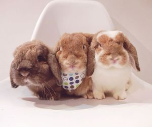 animals, bunny, and photography image