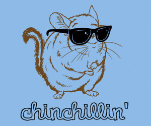 Chinchilla, chillin, and funny image