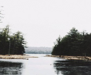 header and trees image