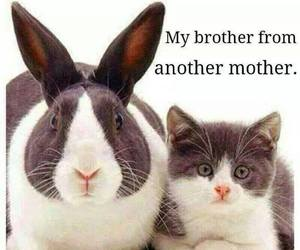 cat, brothers, and animal image