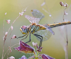 dragonfly and nature image