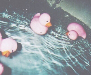 ducks, pool, and grunge image