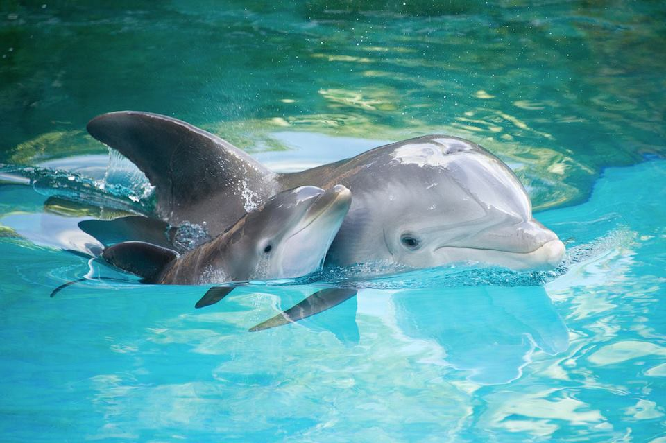dolphin uploaded by i m with stupid on we heart it