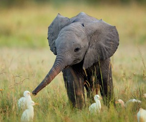 animal, belleza, and elephant image