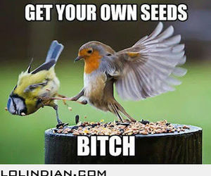 bird, funny, and sparta image