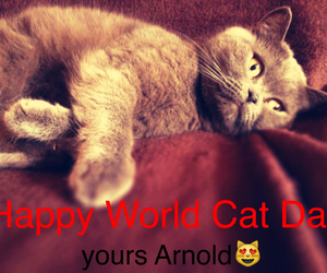 arnold, happy, and cat image