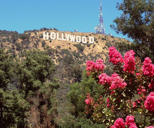 flowers and hollywood image