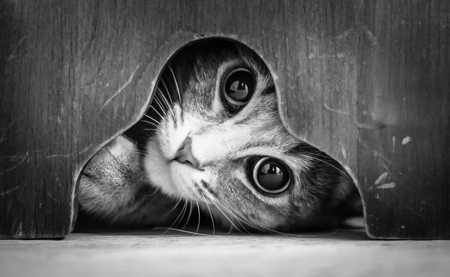 The mysterious lives of cats captured in black and white photography bored panda