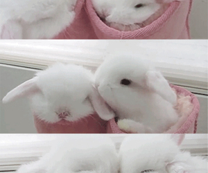 adorable, cute, and love image