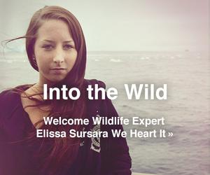 nature, elissa sursara, and we heart it image