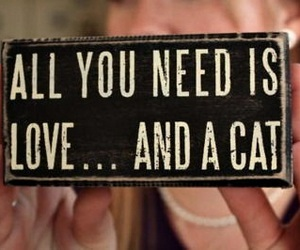 cat, love, and quote image
