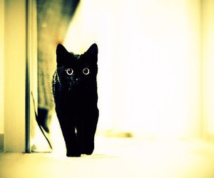 cat, black.bad luck, and cute image