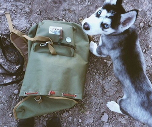 dog, puppy, and adventure image