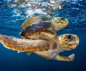 turtles, animal, and nature image