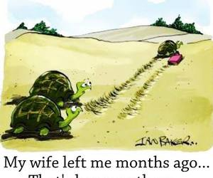 funny, turtle, and wife image