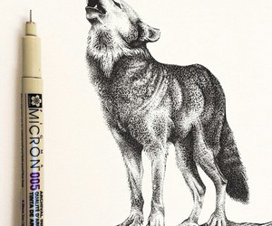 wolf, drawing, and amazing image