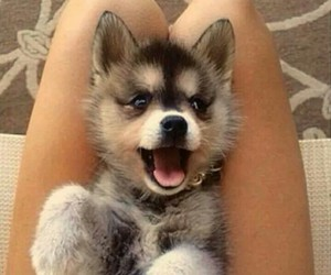 animal, puppy, and smile image