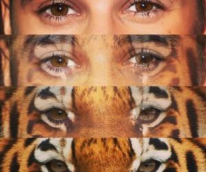tiger, justin bieber, and justin image