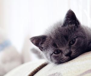 cat, meow^^, and waytoocute image