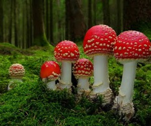 mushroom, nature, and forest image