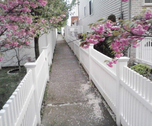 flowers, house, and street image