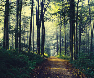 nature, forest, and beautiful image
