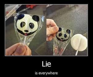 lies, panda, and lol image