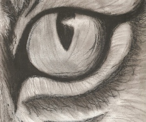 black white, tiger, and drawings image