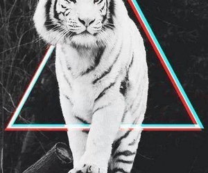 tiger, animal, and triangle image