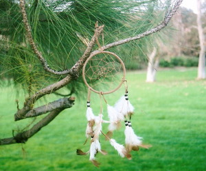 feathers and trees image