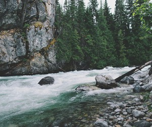 forest, nature, and river image