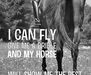 horse, equestrian, and fly image