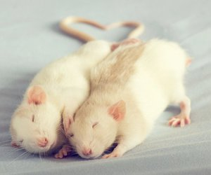 love, rat, and mouse image