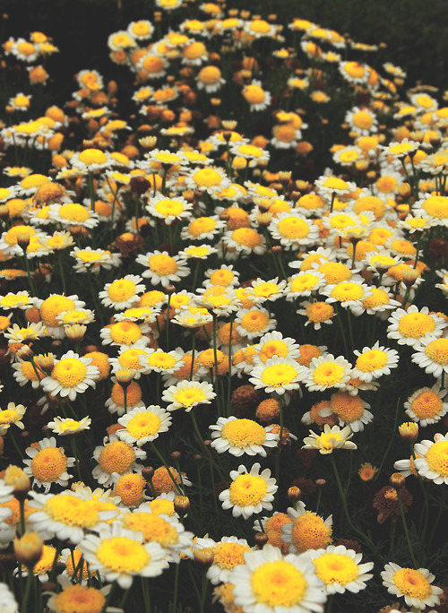 Yellow stands for happiness via tumblr on we heart it mightylinksfo Gallery