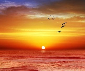 sunset, beach, and ocean image