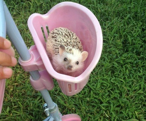 cute, pink, and animal image