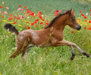 horse and veulen image